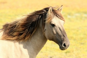 Paarden accessoires