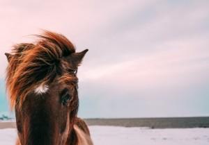 Paardenvoer bestellen