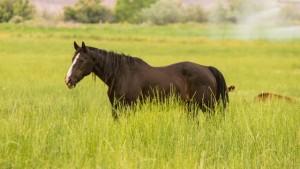 Online paardenvoer